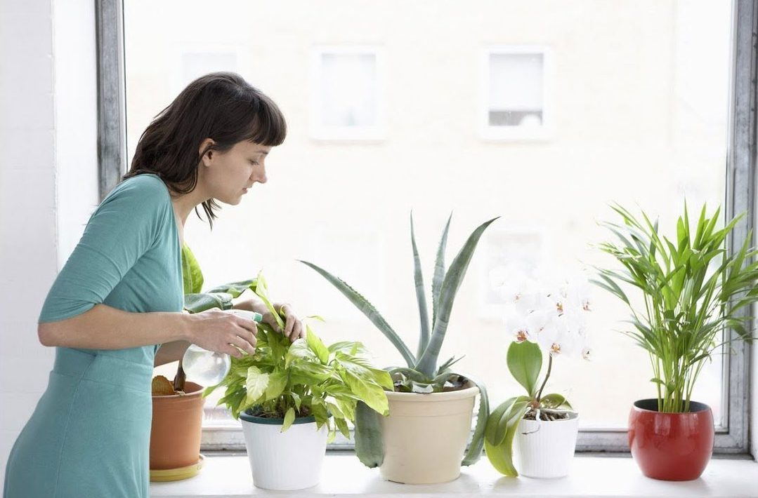 Cómo cuidar las plantas de tu hogar