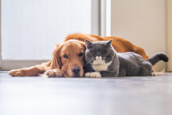 Convivencia de perros y gatos en casa