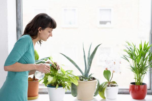 Cómo cuidar tus plantas